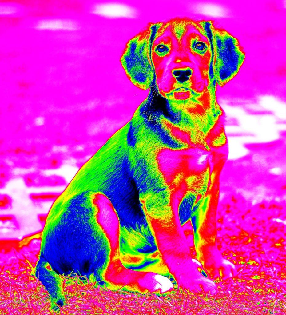 Dog infrared
